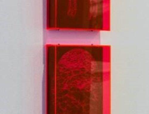 Saffron Newey / Marion Abraham
